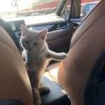 Kittens mee naar huis in de auto