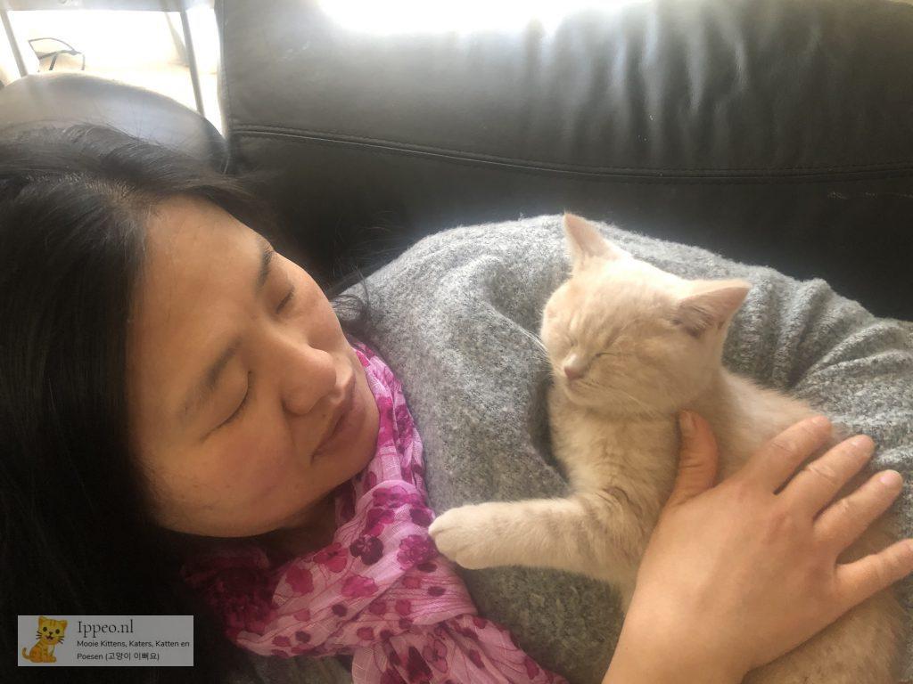 Kitten Samen slapen met Mama