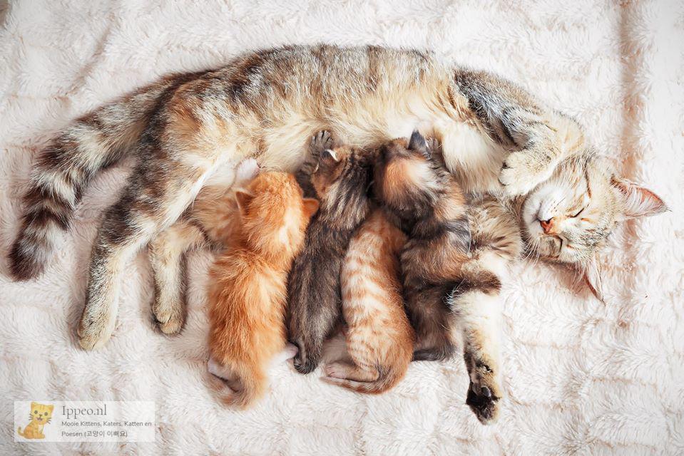 pas geboren kittens
