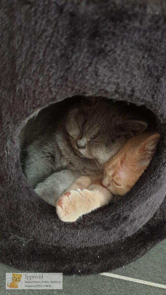 lekker samen slapen.