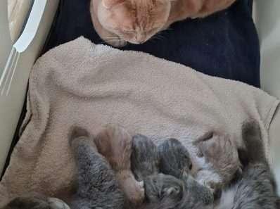 Hecht katten gezin