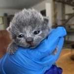 Kitten 4 ogen bijna open