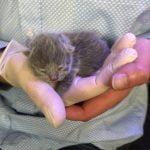 kitten dagelijkse gewicht bekijken