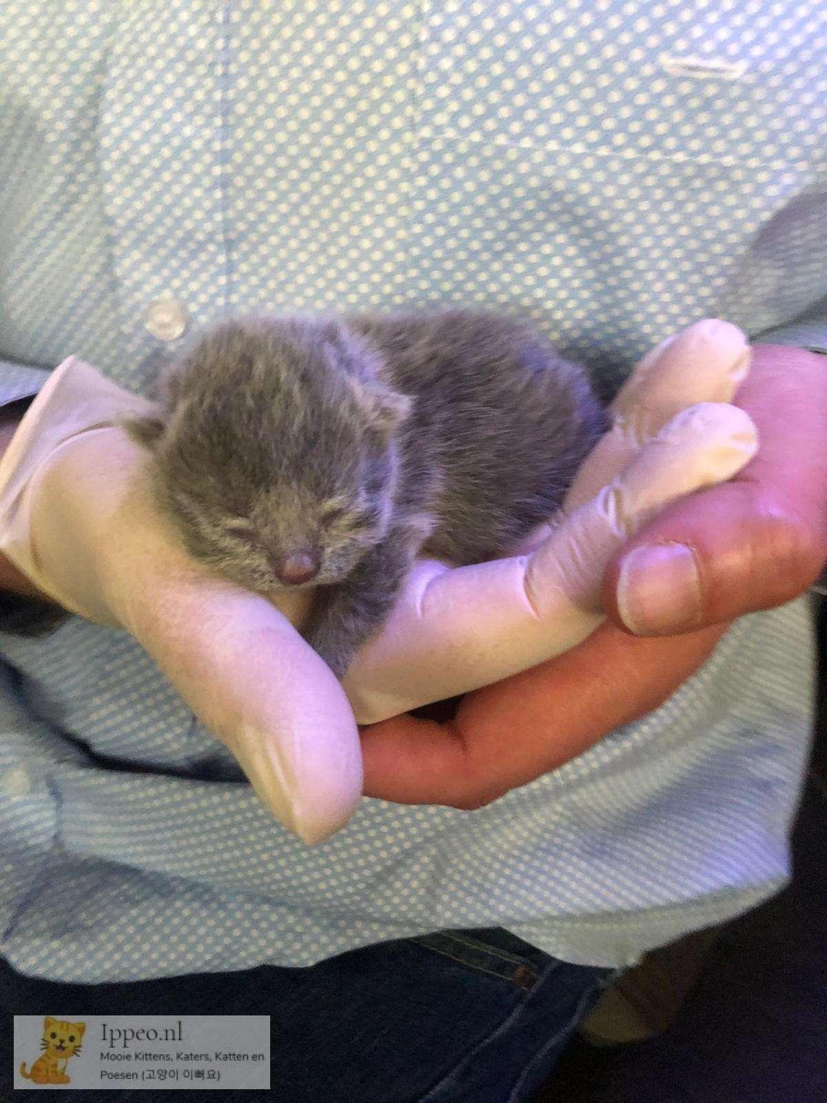 Kitten 2 dagen oud