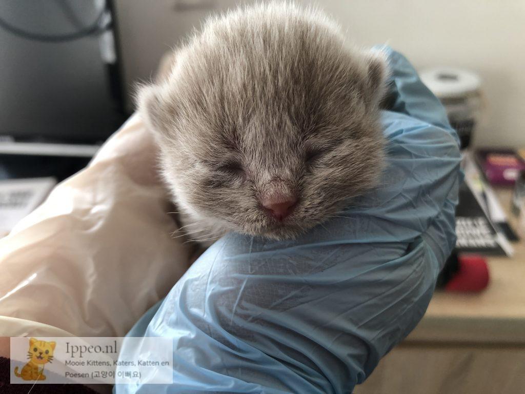 Kitten voor Kelly