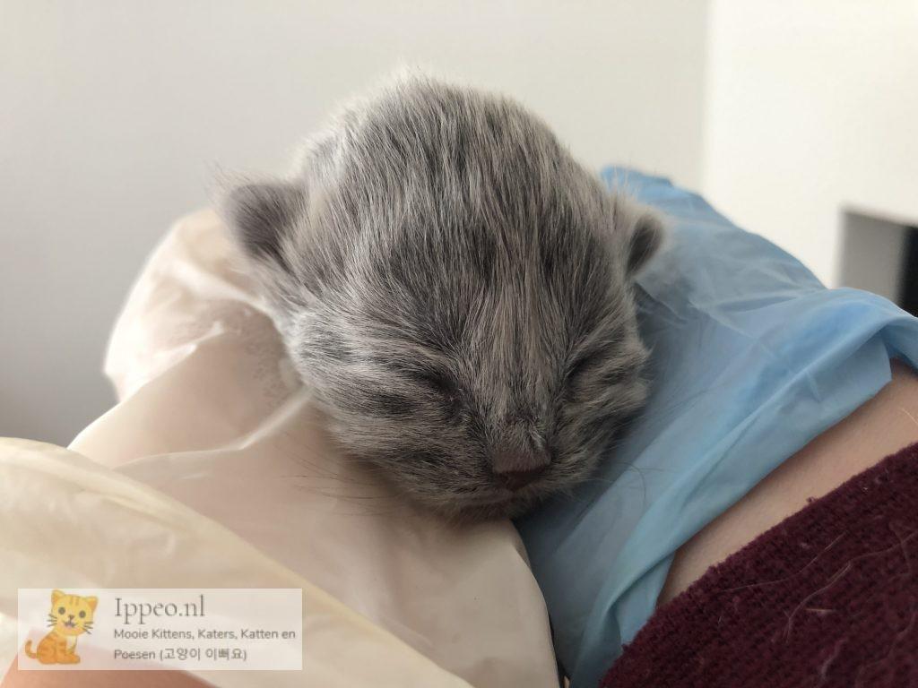 Kitten voor Yookjung