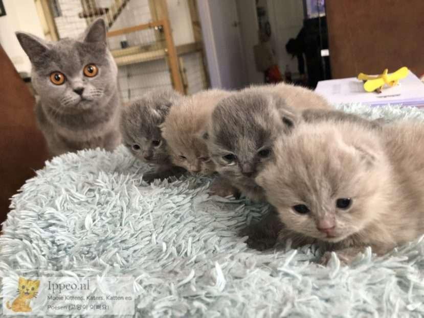 Kittens met moeder