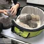 Eerste controle door dierenarts kittens