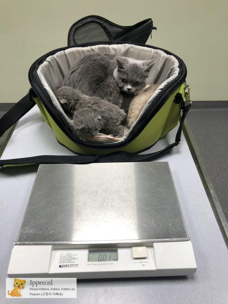 eerste controle dierenarts kitten