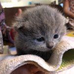 kitten1
