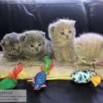 Kittens 3 weken!