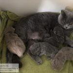 echt kitten gezin