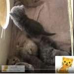 op volgorde kittens 2, 1, 4, 3