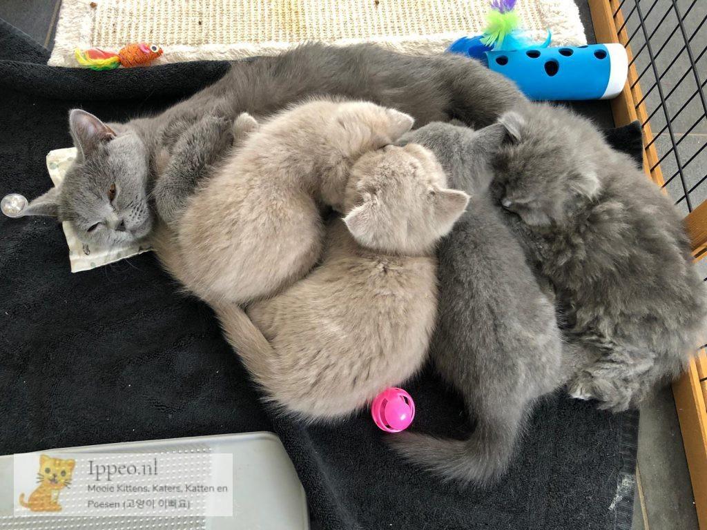Lekker bij mama slapen