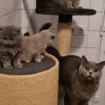 vaccinatiepaspoort kittens