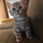 DE kittens 9 weken (peper kan goed springen)