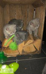 kittens in het hout